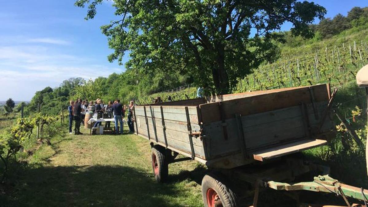 Vineyard visit in German wine region